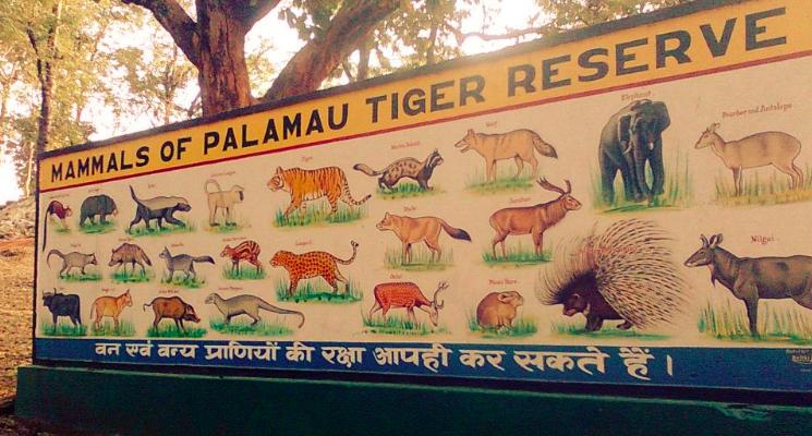 Palamu Tiger Reserve Latehar Betla
